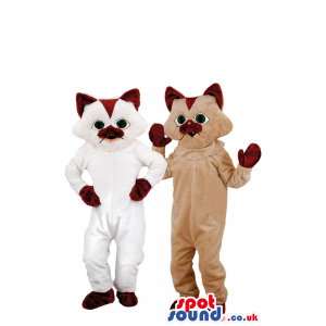Brown And White Couple Of Cats Or Kittens Animal Mascots -