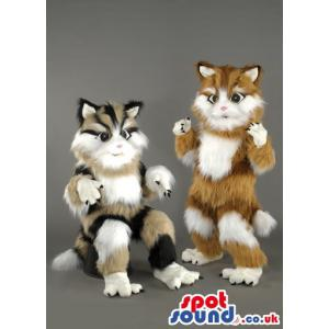 Two Percian cat mascot with mixed colours sitting and standing