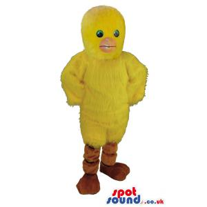 Little yellow chick standing with a cute innocent smile -