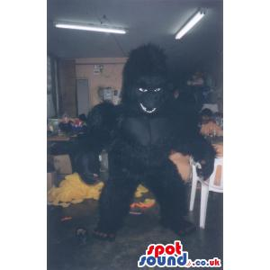 Black chimpanzee with a lot of fur in his body screaming -