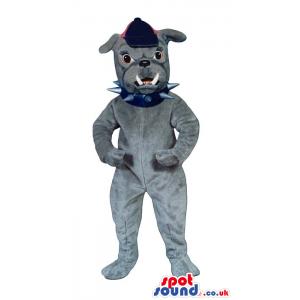 Angry Grey Bulldog Mascot Wearing A Cap And A Studded Collar -