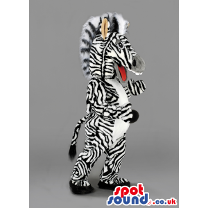 Tall Zebra mascot with large white teeth, open mouth and tail -