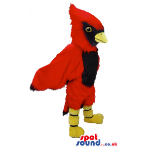 Red fluffy jay bird mascot with yellow beak, feet and brown