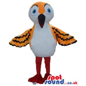 White and orange bird with black stripes, red legs, black beak