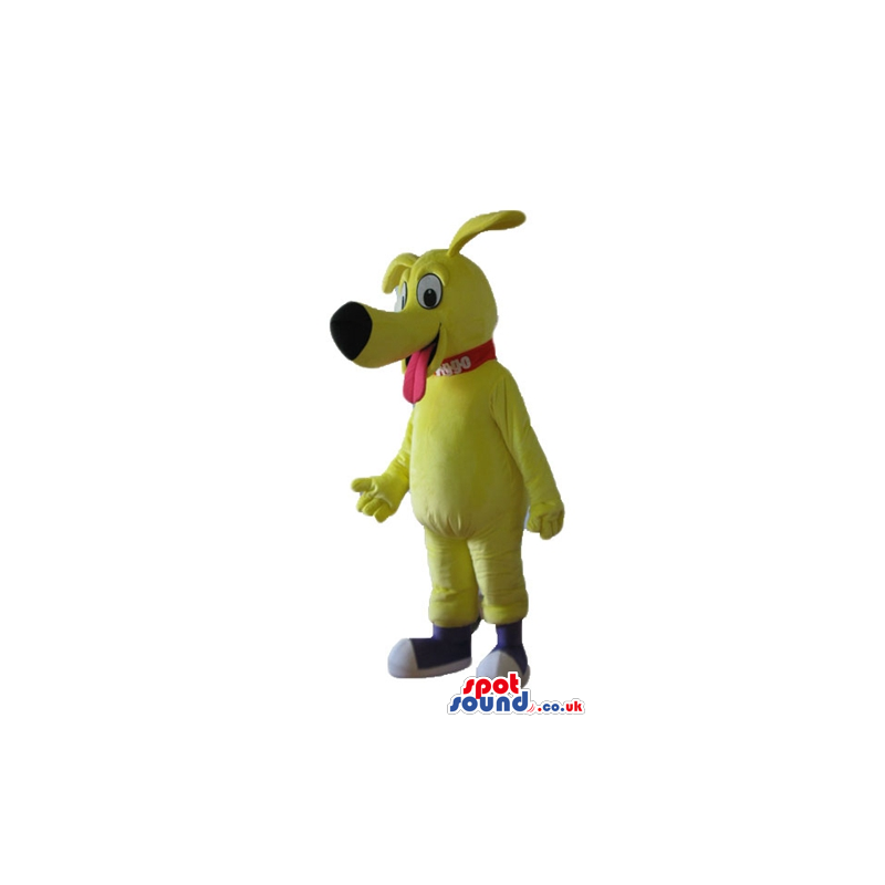 Yellow dog with big eyes and long nose, sticking its red tongue